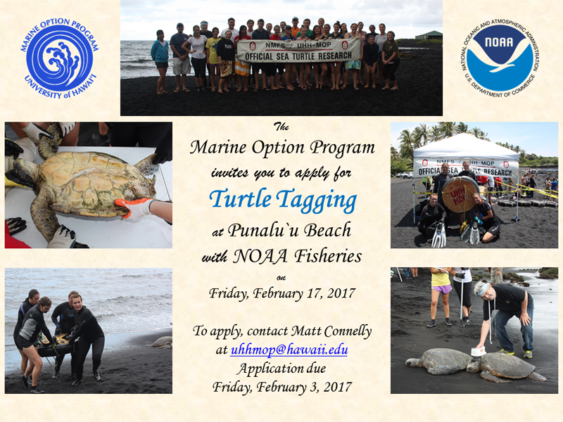 Turtle Tagging Flyer